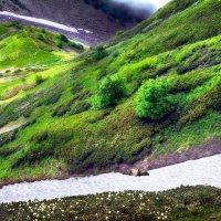 Лето в горах Кавказа :: Alla Potulova