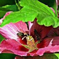 этюд с пчелками :: Александр Корчемный