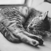 sleepyhead :: Vitaliy Dankov