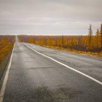 по дороге на Север :: Den Ermakov