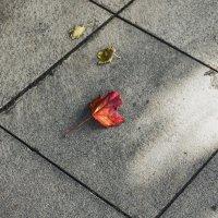 Осень ... :: Сергей Козырев