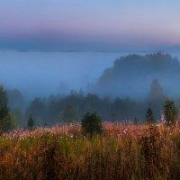 Туманная река, или на холмах вепсского леса :: Фёдор. Лашков