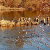 весенние воды Ипути :: Александр Прокудин