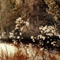 скоро будут зимние цветы... :: Александр Прокудин