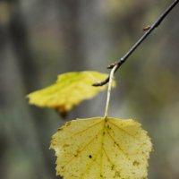 Желтые Листья... :: Дмитрий Петренко
