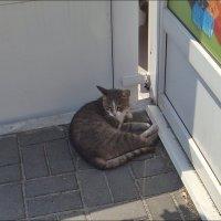 Мама-кошка в тенёчке :: Нина Корешкова