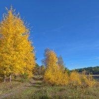 Жёлтые листья :: Анатолий Иргл