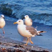 The Box - пляж эмоций. Температуру моря там чайки проверяли... :: Александр Резуненко