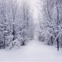 Зима :: Катарина Винниченко