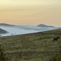 Туман, рассвет и лошади :: Марина Кириллова