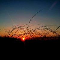 Над полем медленно и сонно заката гаснет полоса... :: Люша