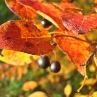 Яркая осень :: Лидия (naum.lidiya)
