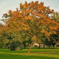 Осень пришла... :: Sergey Gordoff