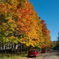 Клёны выкрасили город колдовским каким то цветом..... :: Игорь Смолин