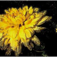 Золотая хризантема :: Нина Корешкова