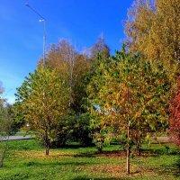 Красавица осень . :: Мила Бовкун