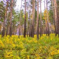 Осенний лес. :: Вадим Басов