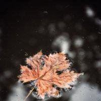 Осенний лист :: Денис Козьяков