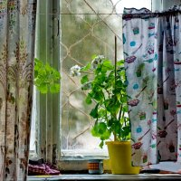 Окошко бабушкиной квартиры. Вид изнутри. :: Михаил Полыгалов