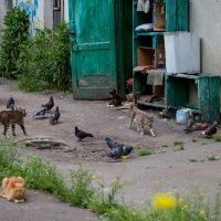 Старый дворик и его обитатели :: Оксана Пучкова