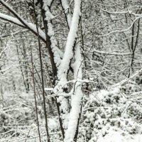 snow :: Vitaliy Dankov