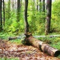 В лесу... :: Кирилл Богомазов