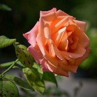 Цветы ушедшего лета. :: юрий Амосов