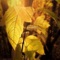 Осень... :: Александр Маркелов