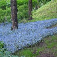 Цветочные поляны в Петергофе... :: марина ковшова