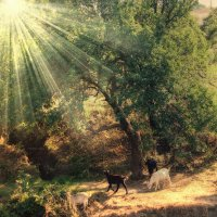 семеро козлят :: Sergii VIdov