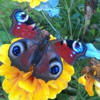Волшебная бабочка :: Светлана