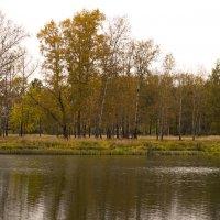 Осень в парке :: Сергей Владимирович Егоров