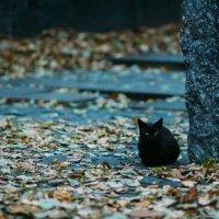 Осенний кот :: Anna Sigida