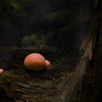 Шагающий грибок - ликогала . :: Va-Dim ...