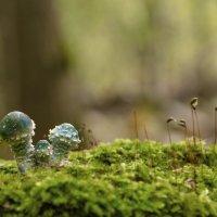 Строфария сине-зеленая . :: Va-Dim ...