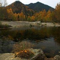 Золотая осень на реке Снежная :: Александр Попов