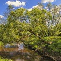 Дерево над речкой :: Сергей Цветков