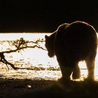 Уходящий в закат :: Денис Будьков
