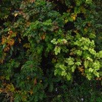 Осенние цветы у дома :: Андрей Лукьянов