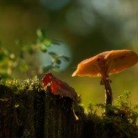 лесной мир ... :: Natali-C C