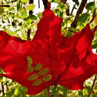 Красный октябрь ... :: Святец Вячеслав