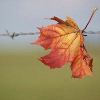 Осенний лист :: donat