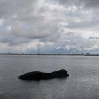 большая собака под дождём :: tgtyjdrf