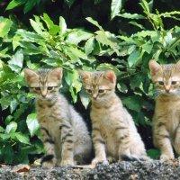Трое в лаврушке... :: Дарья Fox