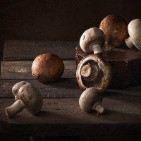 Про грибы :: mrigor59 Седловский
