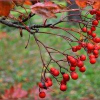 Осень потрепала... :: Vladimir Semenchukov