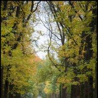 Осеняя аллея, одиночество в парке :: Михаил Онипенко