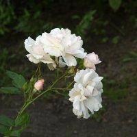 Вспоминая лето :: Aнна Зарубина