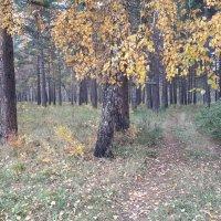 Дорога в лес :: Глен Ленкин