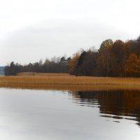 Предчуствие зимы... :: Елена Михайлова .
